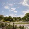 鶴舞公園の菖蒲,紫陽花,薔薇