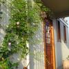 玄関を飾る緑