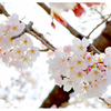 上野公園へお花見に行こう