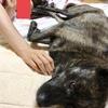 逆襲の甲斐犬サン〜逆襲のシ◯ア ミタイジャネ⁈(ૢ˃ꌂ˂⁎) ウシシ