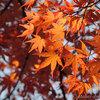 紅葉散歩 旧古河庭園