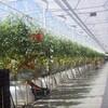 カナダの植物工場市場/施設面積1335ha・市場規模1568億円にて主力産業の一つ