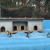 八木山動物園で、超可愛いフレンズたちに会ってきた!【前編】