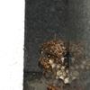 浜松市でお墓にできた蜂の巣を駆除してきました