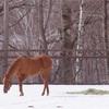 馬友と行く、冬の北海道弾丸旅 〜種牡馬と対面編②〜