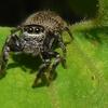 蜘蛛とウマノスズクサ