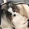 犬の腎臓病を早期発見~SDMA検査~
