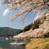 2017年の京都と滋賀の桜めぐり