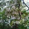 和田堀公園で被災地の酒を持ち寄っての花見飲み会