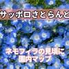 【サッポロさとらんど】ネモフィラの咲く場所や見頃に園内マップ