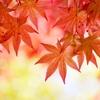 【季節の着物コーディネート】秋真っ盛りそして冬の気配…着物が着たくなる11月