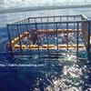 【ハワイ】 ノースショア シャークアドベンチャーズ(檻の中から鮫を眺めるツアー)