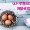 【不妊治療】6回目の体外受精・凍結確認と今後の治療方針