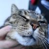 3月前半の #ねこ #cat #猫 その2