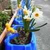 1・2年生 花の栽培
