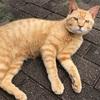 【地域猫】Vol.12 コトラの成長