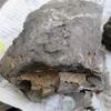 化石採集 徳島県上勝町で貝の化石を見つけました