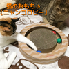 猫のおもちゃの【ニャンコロビー】を買って遊んでみた!キャットニップ入りのボールで猫がふにゃふにゃに~
