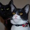 今日の黒猫モモ&白黒猫ナナの動画ー594