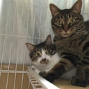 ときたまネコが登場する渋谷区民の日記 -The man lives in Shibuya with cats.