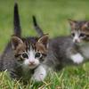 軽い機敏な仔猫何匹いるか