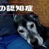 犬の認知症