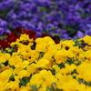 智光山公園で花を撮ってきた!