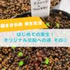 たにログ266 【多肉の実生】はじめての実生!