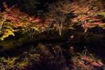 円通院の松島紅葉ライトアップ! 池に映る「逆さ紅葉」や、手入れの行き届いた庭と紅葉の美しいコラボレーション!