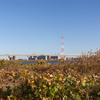 荒川河川敷(江東区側)から首都高速道路を望む