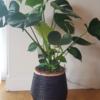オンラインで観葉植物を買う。