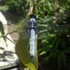 トンボの縄張り & 稚エビの隠れ家・池の水温