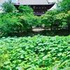 黄檗宗の萬福寺