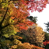 京都)大谷本廟→清水寺→円山公園→知恩院。紅葉見頃。