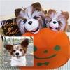 かぼちゃ*花*すずめ