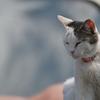 500mmで撮る猫