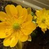 幸せの黄色い花?