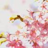 なぞの看板 「USA」がある栗山に もう桜が咲いていて驚いた