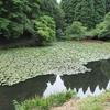 睦沢町やすらぎの森・水生植物園の池(千葉県長生)