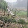 台風19号接近中の畑