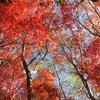 棒ノ木丸~姫次~蛭ヶ岳~本間ノ頭北尾根登山!丹沢最深部の紅葉と落葉松!