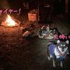犬とソロキャンプ行ってきたよ!ヾ(≧▽≦)ノpart2