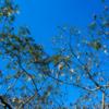 秋の美空に奏でるは 風に揺れてる種の歌