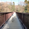 都立小山田緑地のつり橋