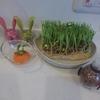 【リボベジ(再生野菜)】生活に癒しと栽培・収穫の楽しみを。手間・コスト不要、食育にもぴったりです