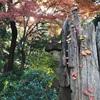 五反田にまさかのパワスポ【池田山公園】