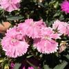 庭の花やハチなど