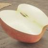 リンゴのモデリング ~その10:リンゴの断面~【Blender #509】