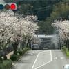 桜並木🌸🌸