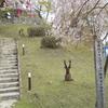桜ツー その2
